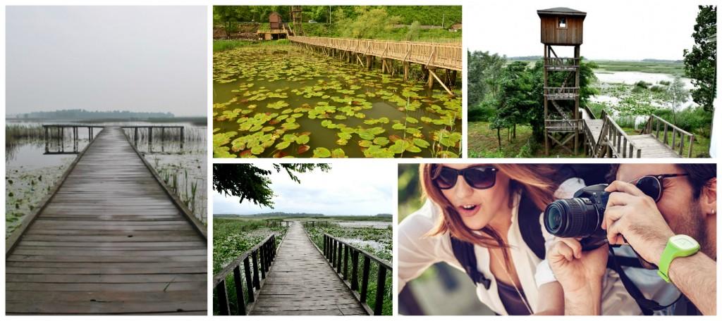 Efteni Gölü Fotoğraf
